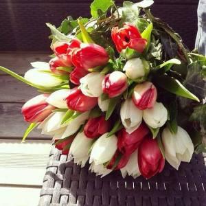 El tulipán rojo es la flor que simboliza el amor perfecto.